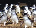 penguins_01200750